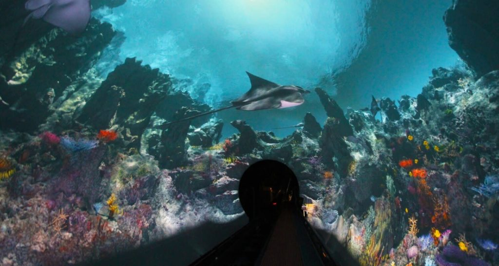 Manta-immersive-tunnel-seaworld-san-diego
