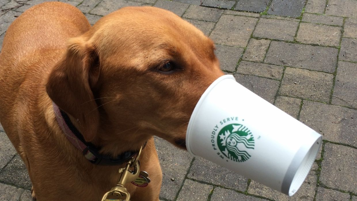 Pup-and-Cup